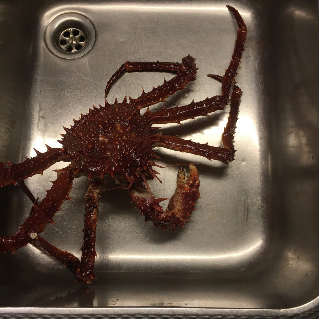 monster krab